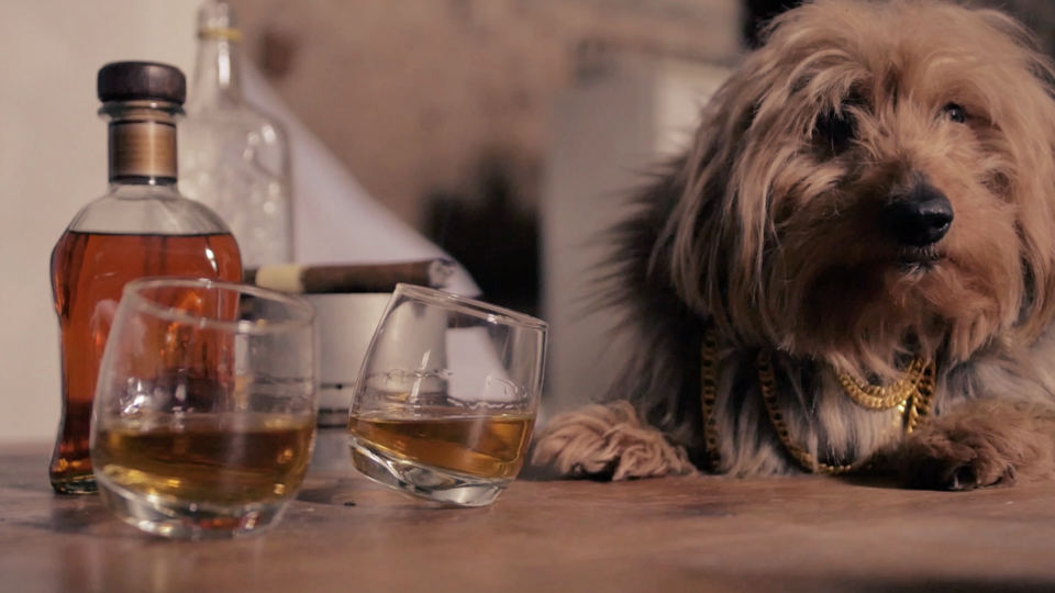Stanzy Studio, Constance Rollet, Kendrick Lamar, Dog, Dogs, music video, videomaking,
